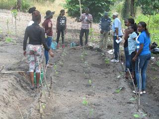Emploi vert ; solution économique et sociale durable pour la RDC